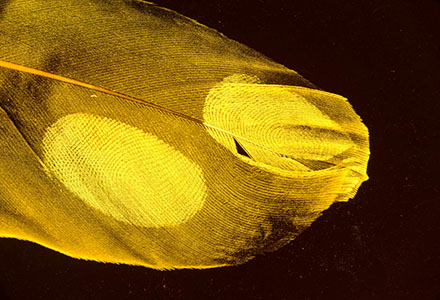 >Nano fluorescent powdered feather by AgileLite
